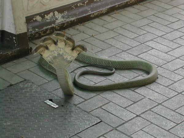 Sheshnag: five headed snake. | Bloggers unite